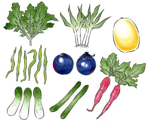 新 大和野菜のコピー.jpg