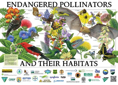 """Endangered Pollinators"", 2019 Pollinator Poster, Credit: Carol Schwartz"