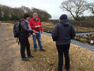 VISITING CHICHESTER PLANTS AND SHRUBS