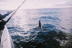 Sea Angeling
