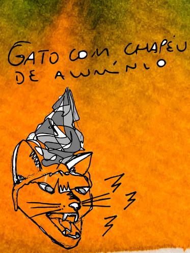 GATO 1.jpg