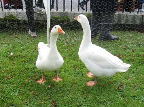 Goose Fair 3.jpg