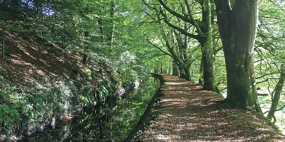 Discover Tavistock - The Canal