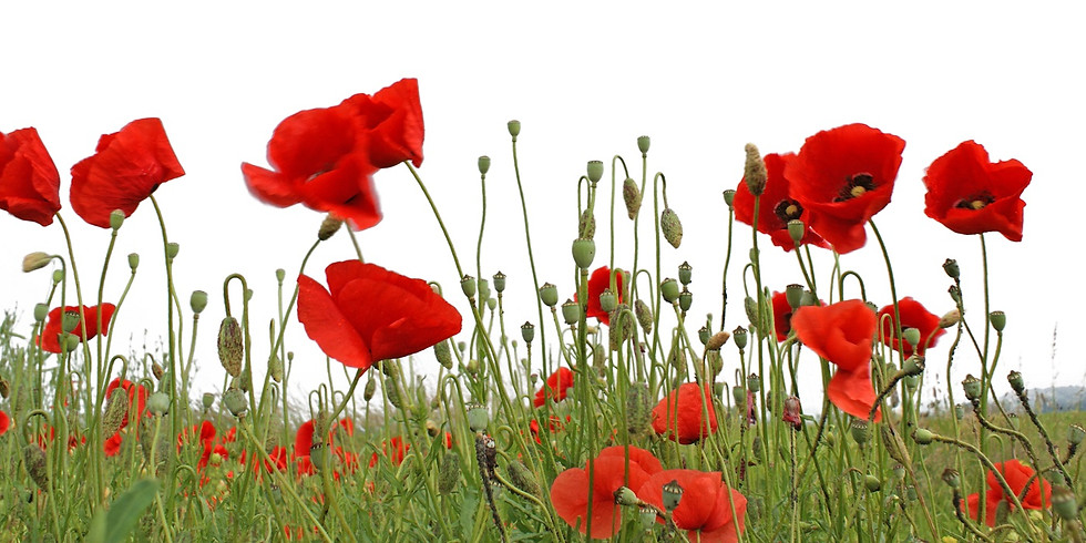 REMEMBRANCE SUNDAY LUNCH