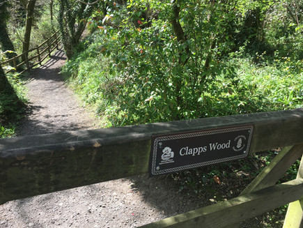 CLAPPS WOOD