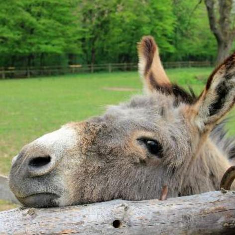 Tamar Valley Donkey Santuary