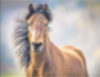 Dartmoor pony in EDP.JPG