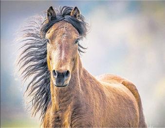 Dartmoor pony in EDP.JPG