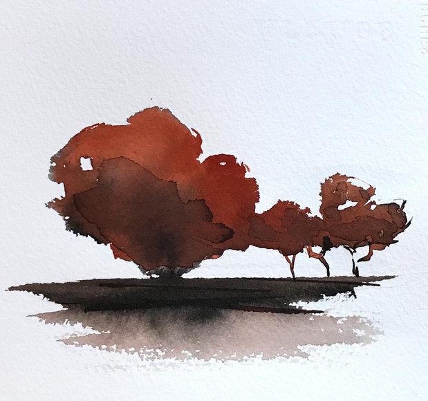 35X30 cm - arbres d'automne