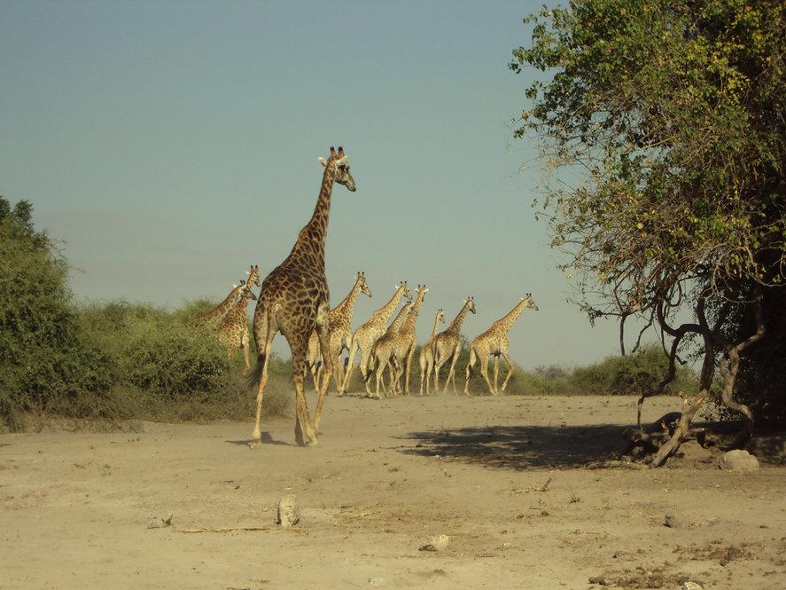 Gay Safari Africa.JPG