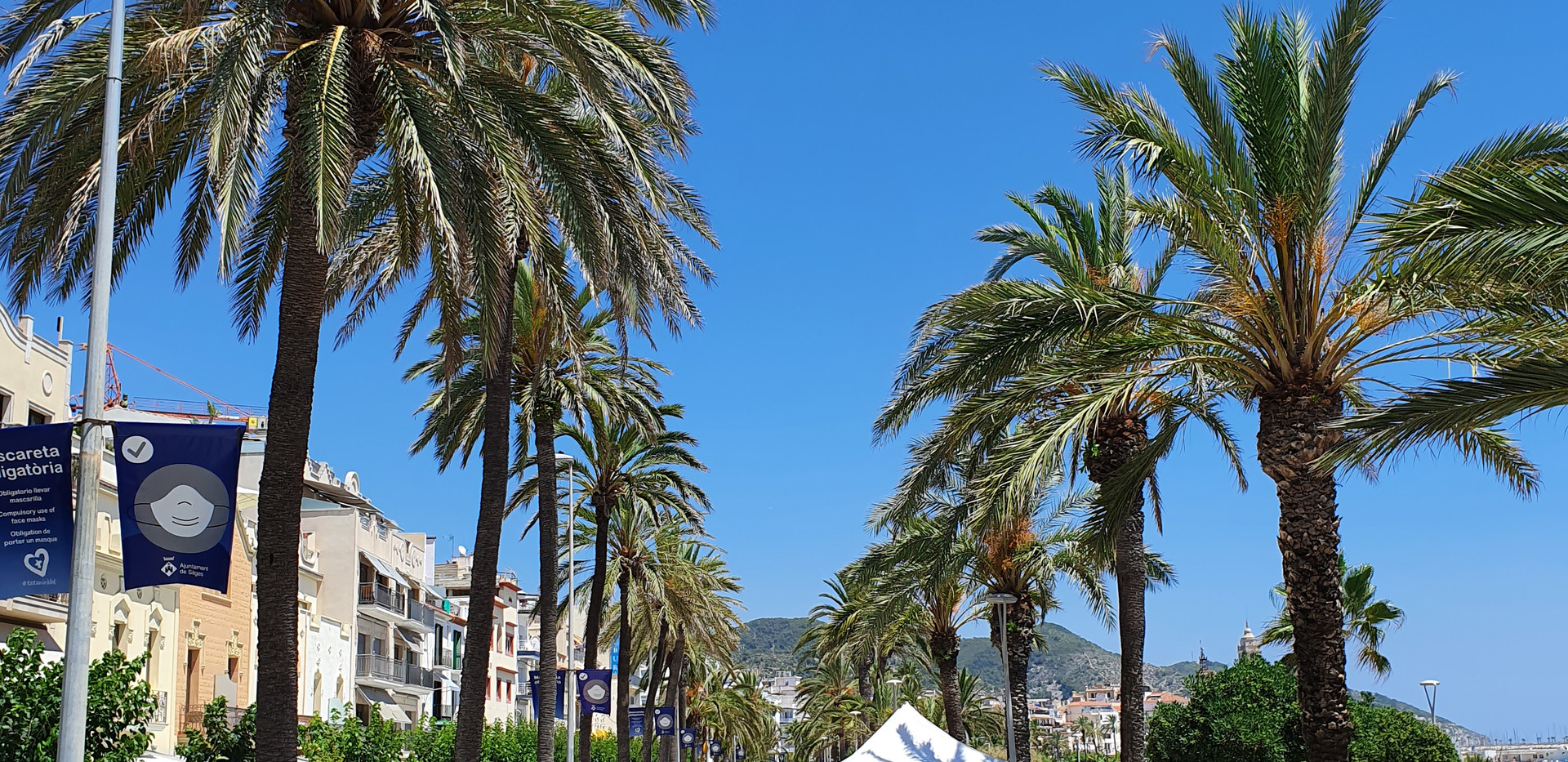 The Lovely Palms of Sitges