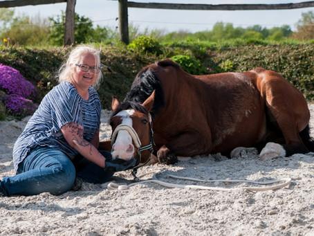 Nachlese zum Kurs mit Hello Horses 🐴