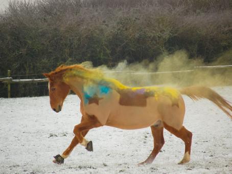 Holi - Pferde - Shooting 🐎