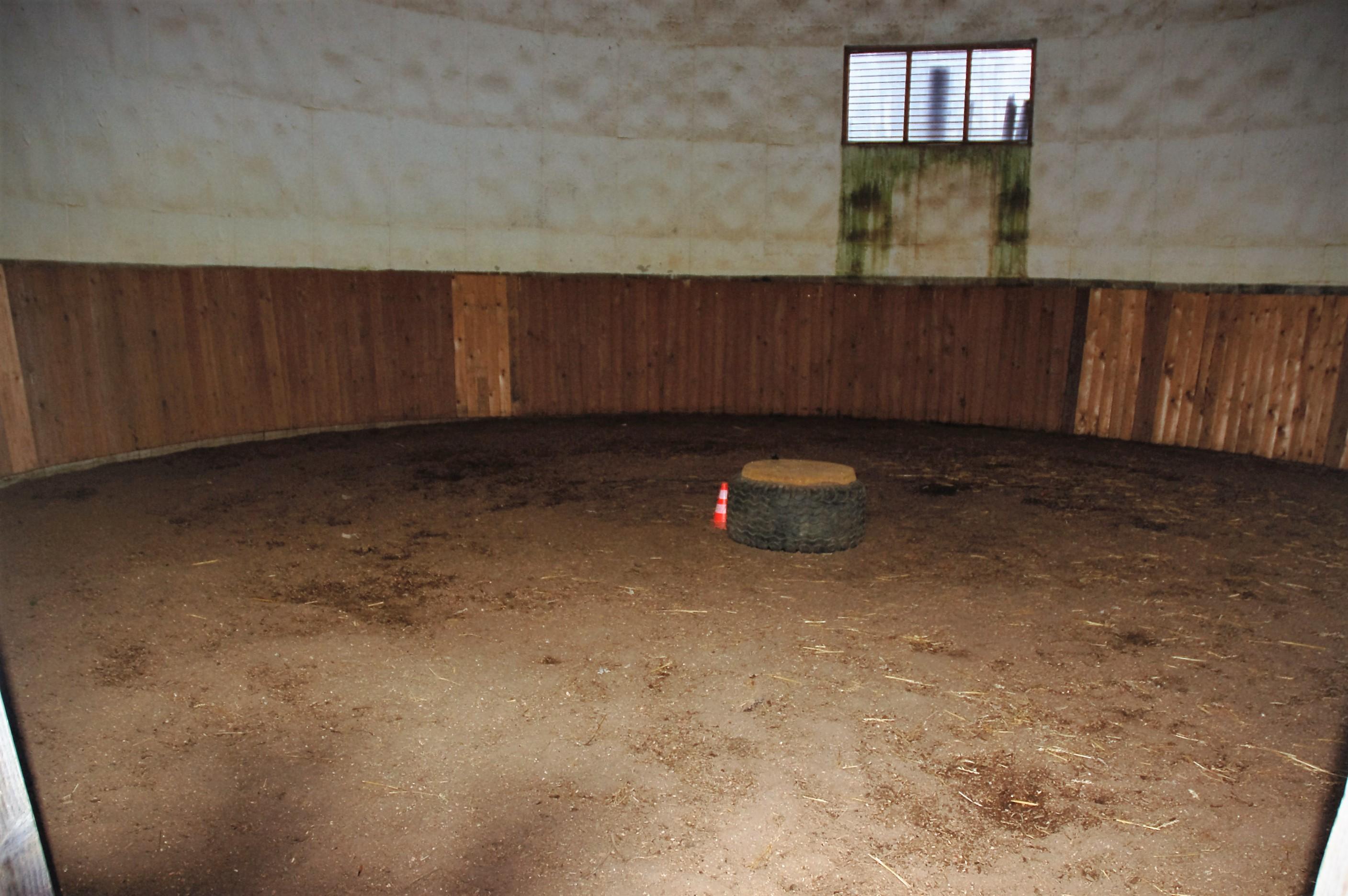 Longierhalle / Roundpen