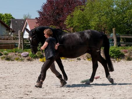 Wochenendseminar: Mit Pferden kommunizieren 🐴