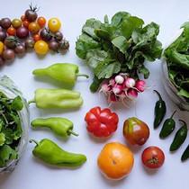 CSA week 17 ~ mixed greens, cherry tomat