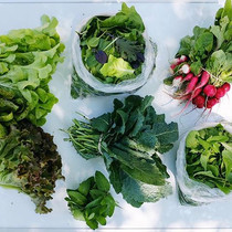 All the greens in this week's CSA share