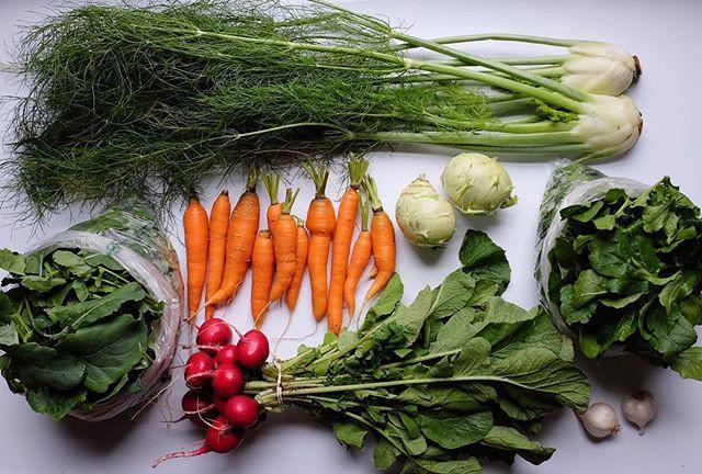 CSA week 25! ~ spigarello, fennel, carro