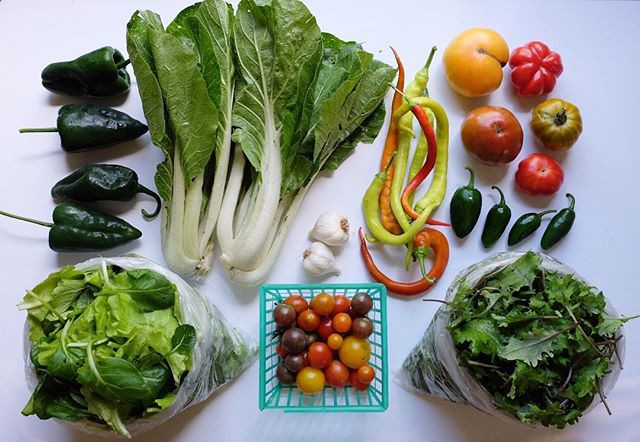 Fresh veggies in the house! CSA week 20