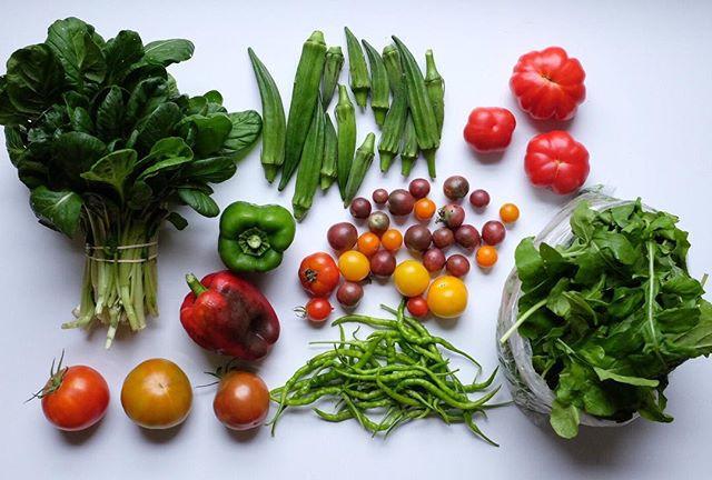 CSA week 19 ~ tatsoi, heirloom tomatoes,