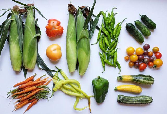 zucchini, adam gherkin cucumber, corbac