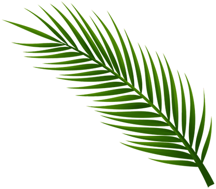 1495753065Palm-Tree-Leaf-PNG-Clip-Art_ed