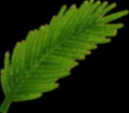 1495753065Palm-Tree-Leaf-PNG-Clip-Art_ed