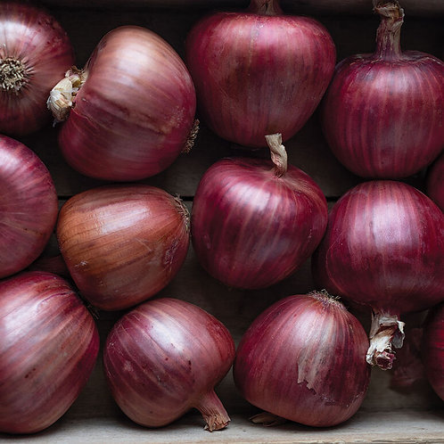 Red Onion Starts