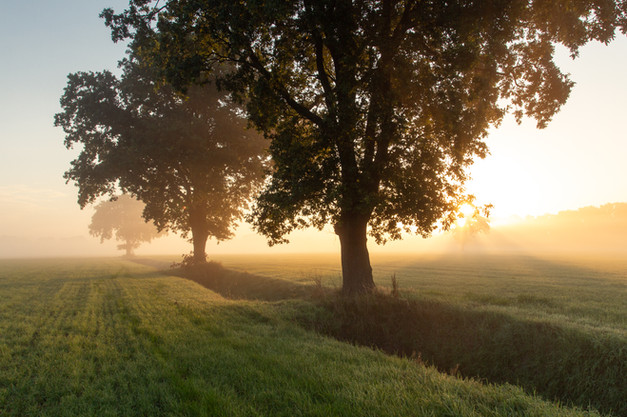 Meadow mornings in Twente
