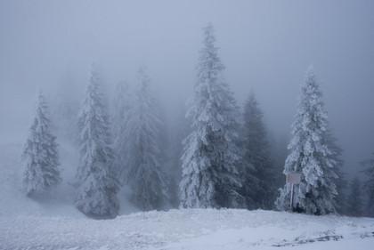 Bavarian snow cones