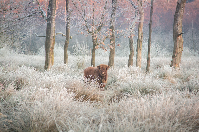 In the frozen marshes - Buurse