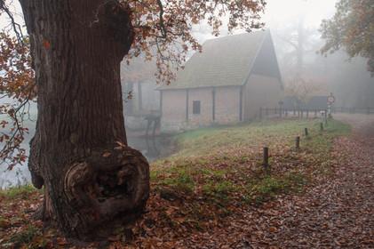 Big bark at the watermill