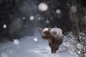 Caught in a Blizzard
