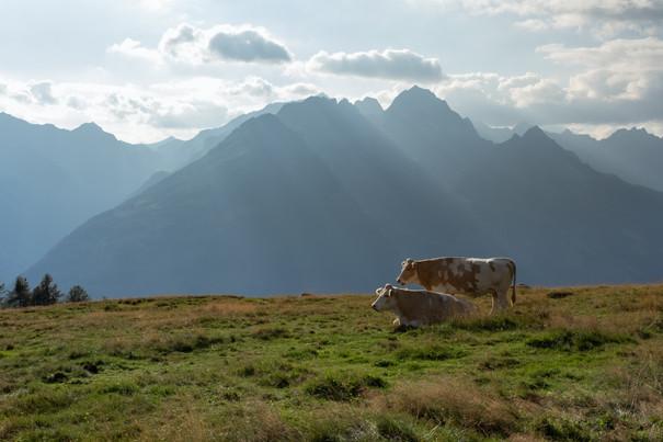 Alpine meadow locals
