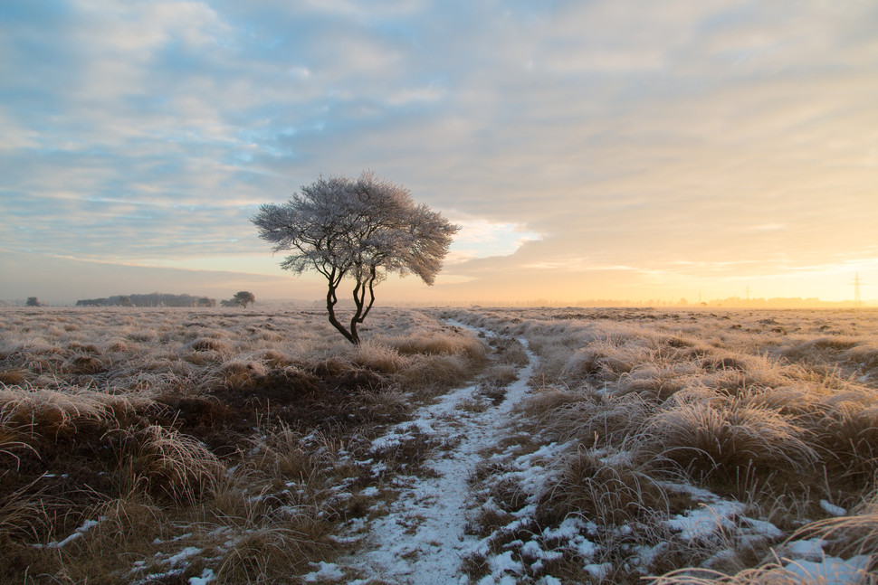 Lone tree at the moor
