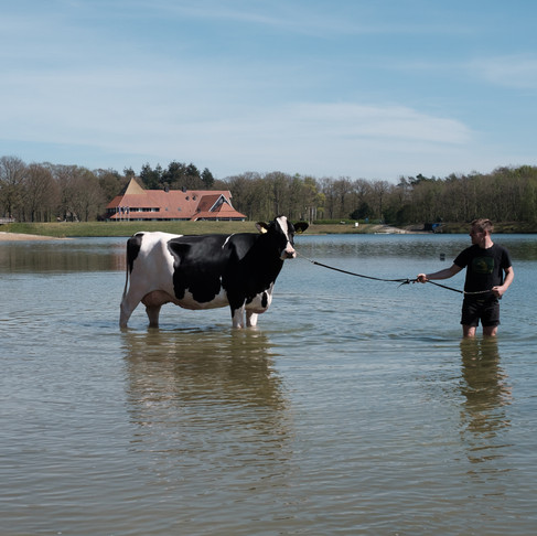 Cowfluencer Liesje 22: Achter de schermen