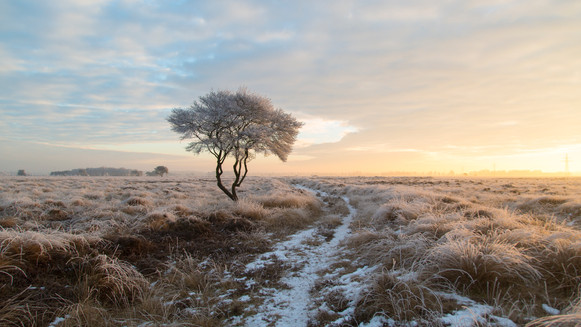 Frosty Dutch Savannah