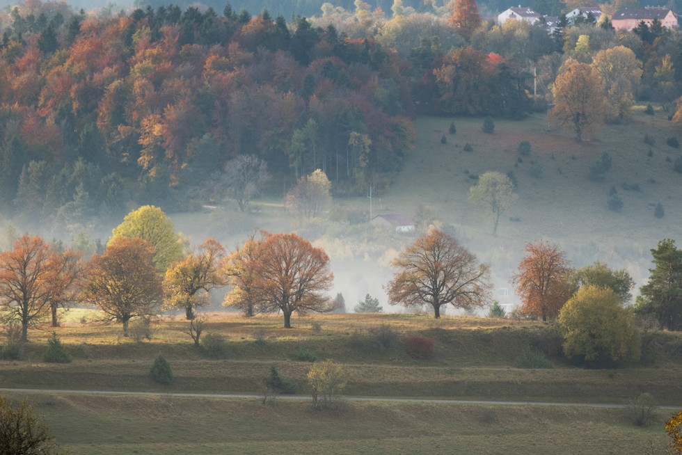 Autumn morning in the Hills of Baden-Württemberg