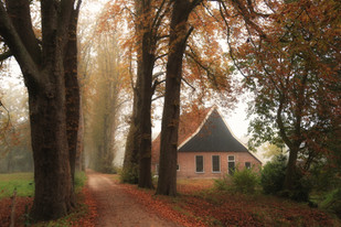 Autumn lane, Twente