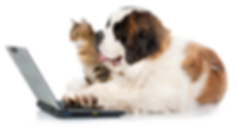 dog on cat on computer.png
