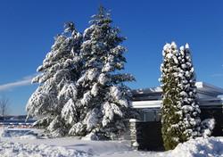 LFYC winter 4_edited