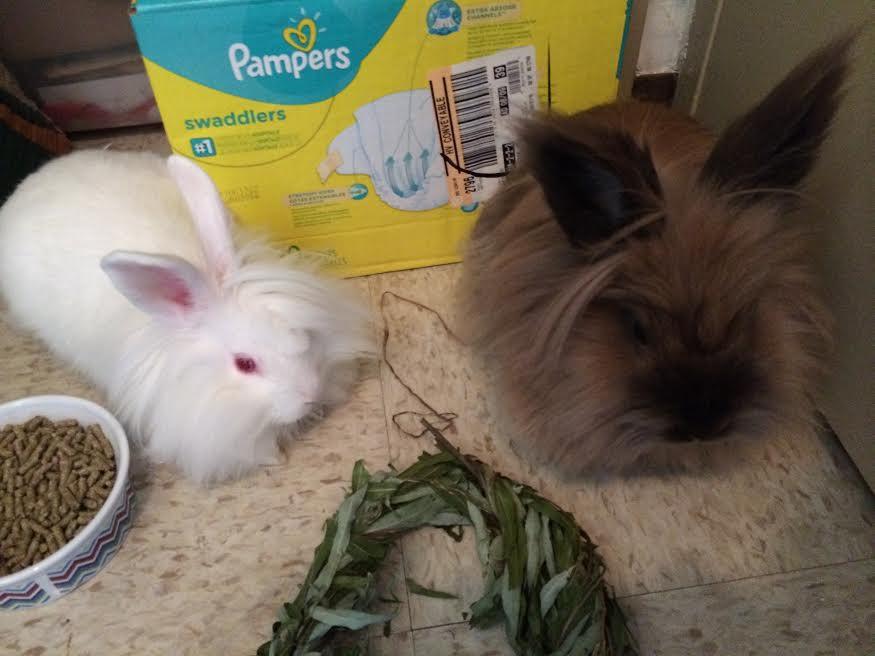 Sugar and His New Partner