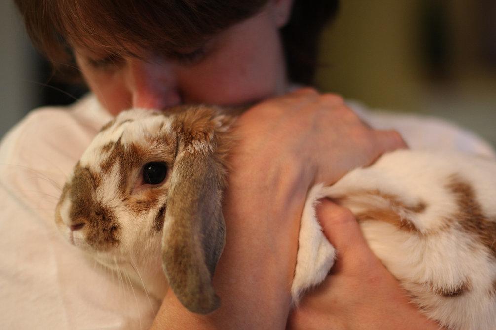 Bunny_Cuddle.jpg
