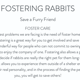 Scroll to meet our current fosters
