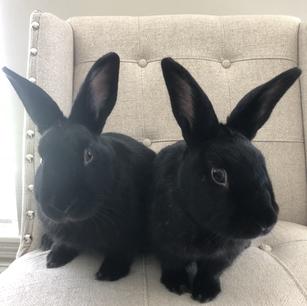 Meet Monica + Rachel!