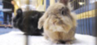 20160625lf-Rabbit02-4.jpg