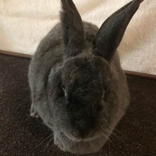 Meet Louise!