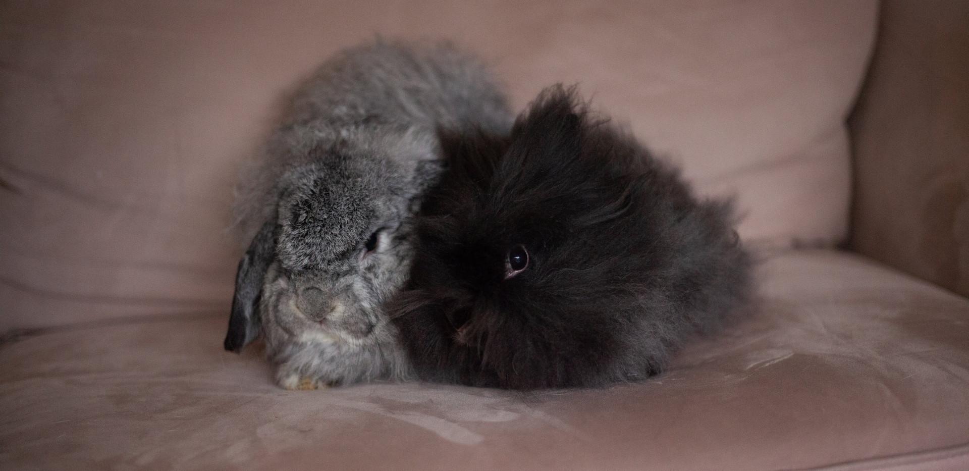 Meet Truman and Mirielle!