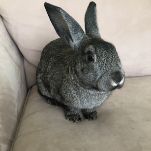 Meet Ella Rose!