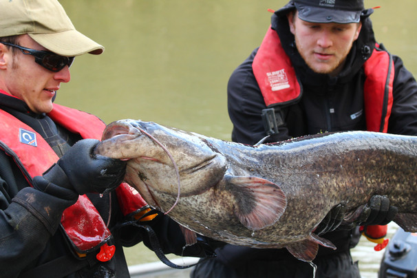 42lb Catfish.JPG